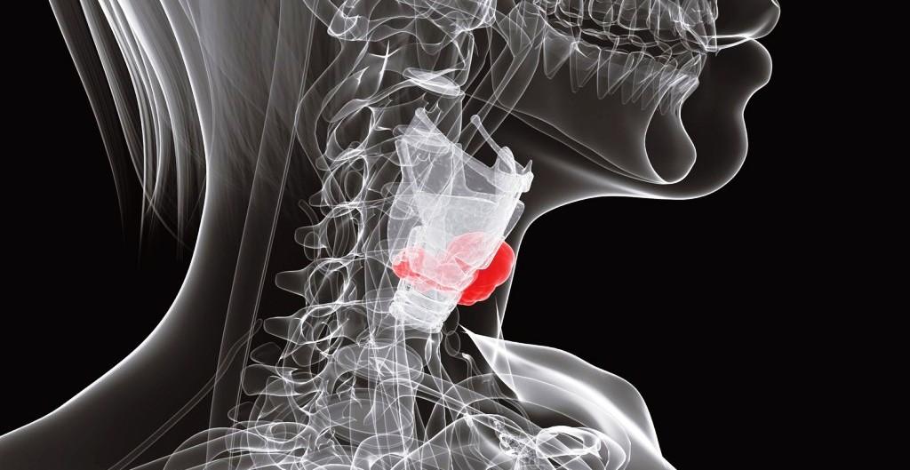 Эутиреоз щитовидной железы