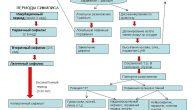 patogenez-sifilisa