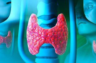 Thyroid gland, computer artwork