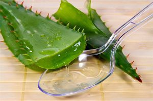 Сок алоэ используют при лечении ангины.