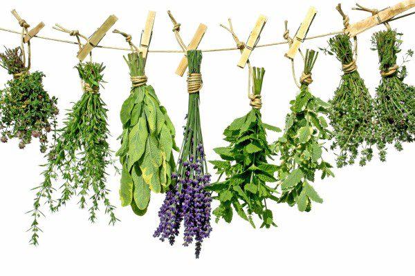 Лечение травами следует совмещать с медикаментозной терапией.